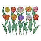 Spring Tulips by joeyartist