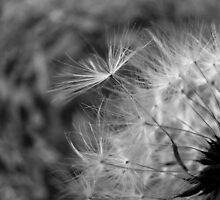 Dandelion and Dreams by Tracy Engle