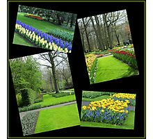 April in the Keukenhof Gardens Collage Photographic Print