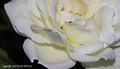 macro flora 019 by Karl David Hill