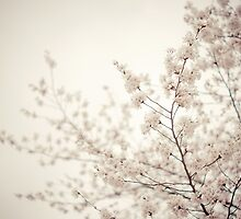 Whisper White Spring Blossoms - Central Park by Vivienne Gucwa