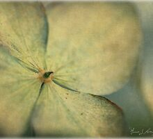 Scent of Summer by Annie Lemay  Photography