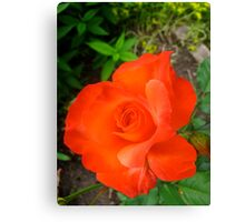 Between  passion and jealousy rose Canvas Print