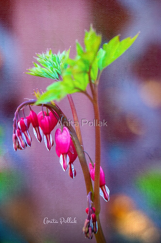 Bleeding Heart Flowers by Anita Pollak