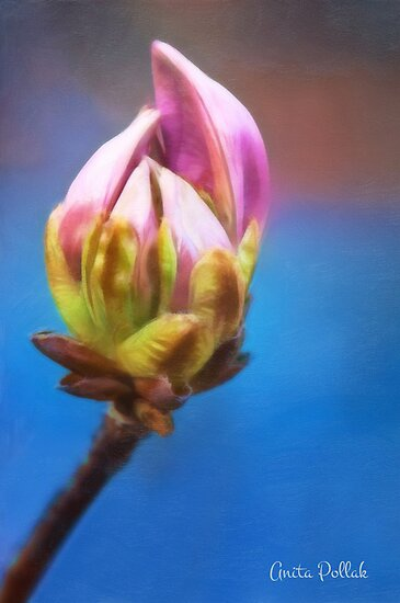 Painted Royal Azalea Bud by Anita Pollak