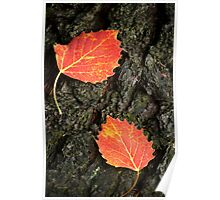 Two Aspen Leaves Poster