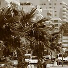 """Summer in Larnaca """"Finigges"""" by John Papaioannou"""
