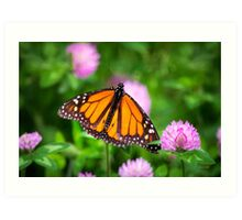 Monarch Butterfly on Pink Flowers Art Print