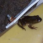 Frog on a kayak by bugieshus