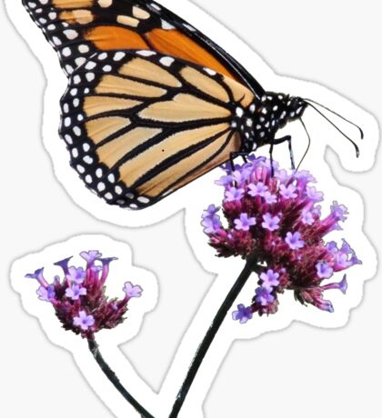 Monarch tee2/prints/products Sticker