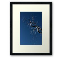 Silver and Blue - a Metal Tree Sculpture Plus Blue Sky and Sunshine Framed Print