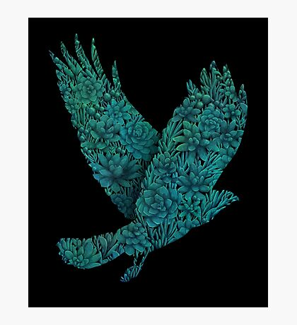 Blue bird Photographic Print