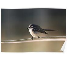 Fantail Delight Poster