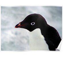 Adelie Penguin Portrait, Cape Adare, Antarctica Poster