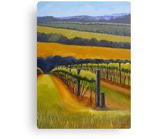 Vineyard Mornington Peninsula Canvas Print