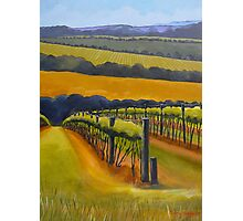 Vineyard Mornington Peninsula Photographic Print
