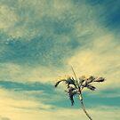 rest the eyes in the skies by Angelika Sielken