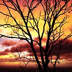 Sunset tree by GCBela