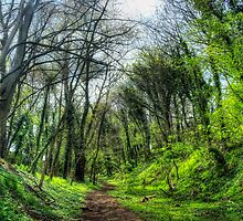 Green Forest Path by Vicki Field