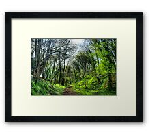 Green Forest Path Framed Print