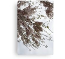 Just Lift Your Head and Enjoy Spring Canvas Print