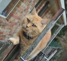 Moving cat picture. by bearwings