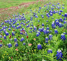 The Flower Fields Of Spring by Carolyn  Fletcher