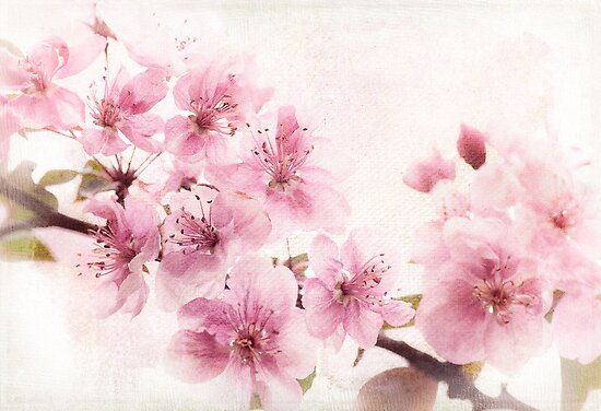 Apple Blossoms in High Key by Beth Mason