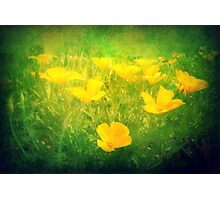 Field of Golden Poppies Photographic Print