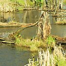 beauty in the swamp by deville
