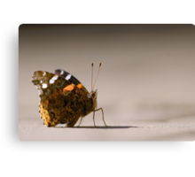 Red Admiral Strikes a Pose Canvas Print