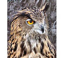 Eurasian Eagle Owl. Photographic Print
