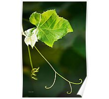 Green Grape Vine Art Poster