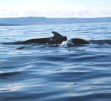 Pilot Whale Family by Peggy Berger
