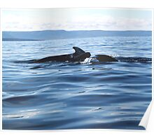 Pilot Whale Family Poster