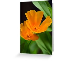 Orange Poppy Flower Art Greeting Card