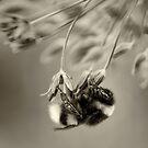 Breezy Allium by Sarah-fiona Helme