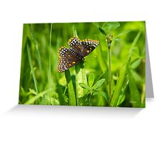 Pretty Baltimore Checkerspot Butterfly Art Greeting Card