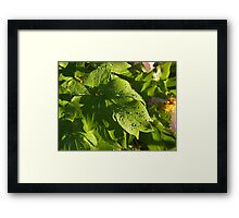 Peony in the Sunlight Framed Print