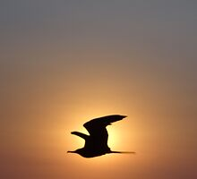 Passing The Sun - Pasando El Sol by Bernhard Matejka
