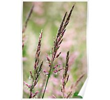 Pink Grass Abstract Poster