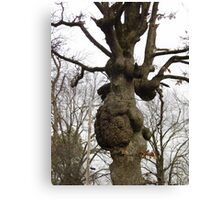 Lumpy Tree Canvas Print