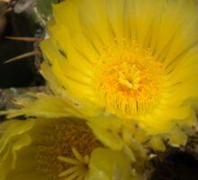 Gossamer Petals - Twin Cactus Blooms Sticker