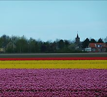 Flower Carpet. by Janone
