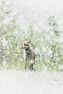 Fox, First Snow by Andrew Bret Wallis