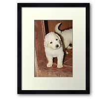 "Abby ""Did Someone Call?"" Framed Print"