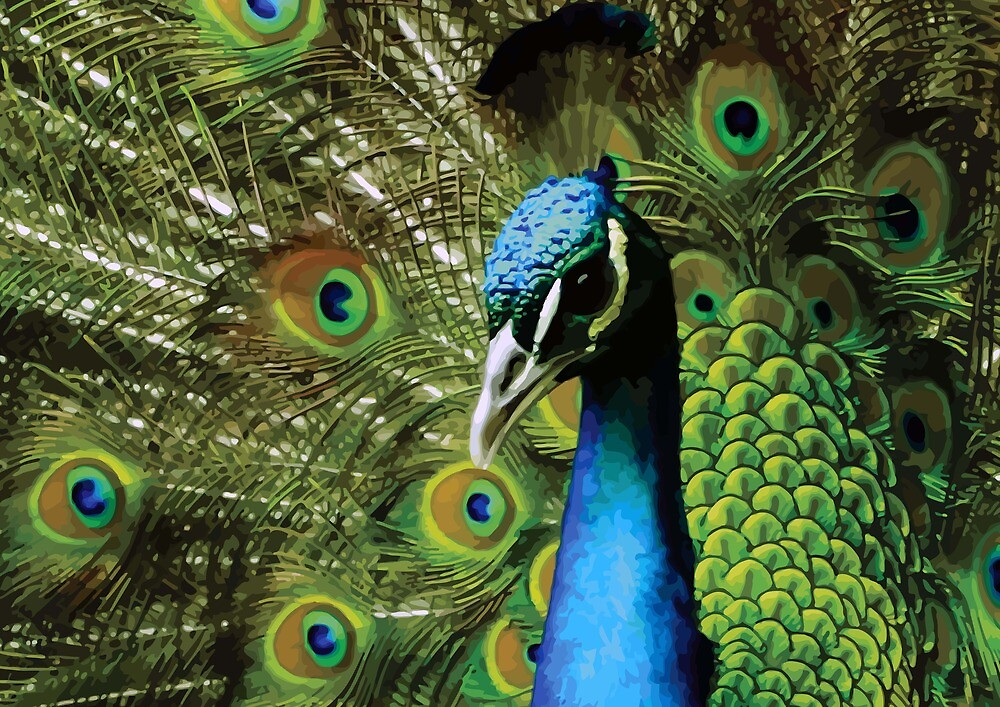 BEAUTIFUL FREAKY COLOURFUL PEACOCK by Christopher McCabe