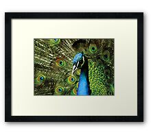 BEAUTIFUL FREAKY COLOURFUL PEACOCK Framed Print