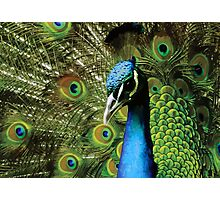 BEAUTIFUL FREAKY COLOURFUL PEACOCK Photographic Print