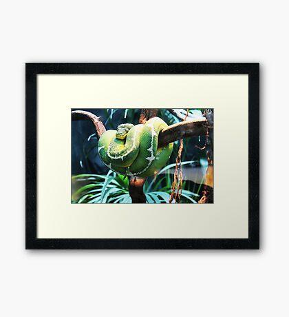 Green snake Framed Print
